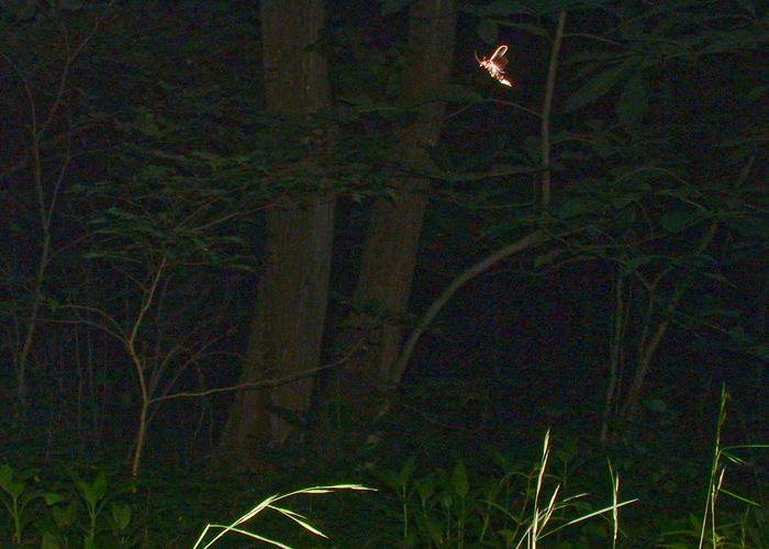 Fireflies at night.