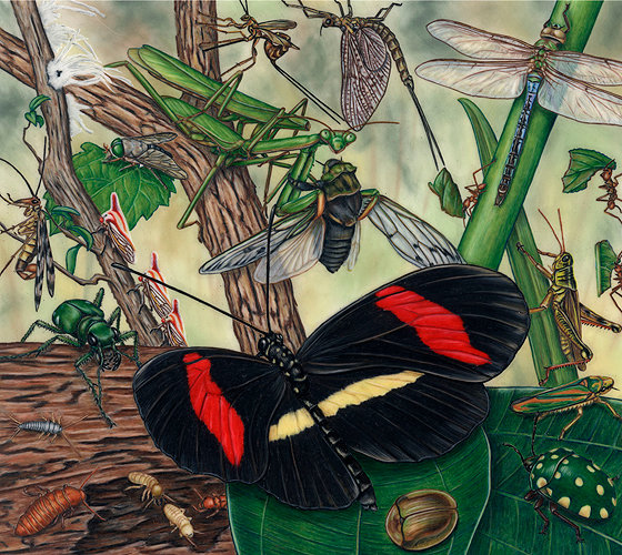 illustration_Insects_lg