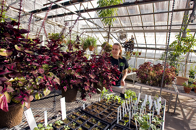A student waters plants at the Ecology and Evolutionary Biology Greenhouse. (FJG Photography for UConn)