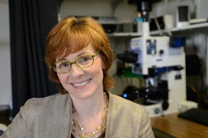 Caroline Dealy, associate professor of Reconstructive Sciences at the Health Center, established the Technology Incubation Program. (Peter Morenus/UConn Photo)