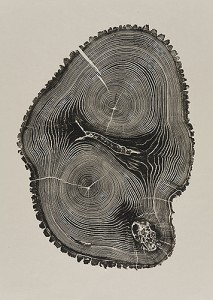 """Leader 2010: Ash, 30 1/2 x 21 1/2 inches from the book """"Woodcut"""". In this oblong section the leader, or trunk, is divided into two. The cores, surrounded by rings, create a topographical feel."""