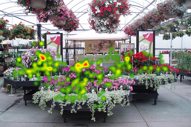 The same nursery display with 'hot spots' picked up by eyetracking technology. (Photo courtesy of Ben Campbell)