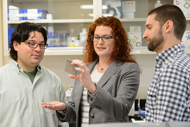 Rachel O'Neill, professor of molecular and cell biology, with Nathaniel Jue, a postdoctoral fellow, and research assistant Craig Obergfell, examine a plate used for sequencing. (Peter Morenus/UConn Photo)