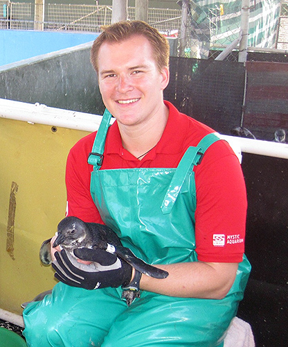Josh Davis '10 (CANR) with one of the adult South African penguins he met on his trip to assist SANCCOB in the rescue of orphan birds. (Photo courtesy of Mystic Aquarium)