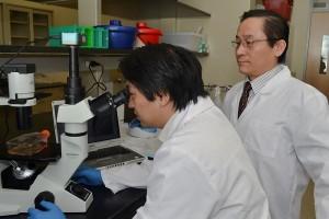 ImStem Biotechnology Inc,