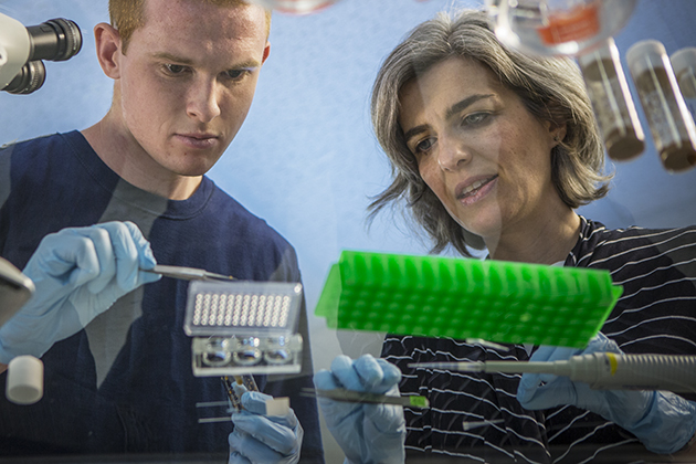 Barbara Mellone, assistant professor of Molecular & Cell Biology, works with a student in her lab. (Paul Horton for UConn)
