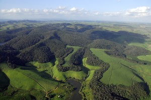 The Serra Grande forest in northeastern Brazil has large plantation clearings where sugar cane has been grown for more than 100 years. A significant portion of this landscape is now being considered to undergo forest restoration under new Brazilian forest codes. (Photo by Adriano Gambarini)