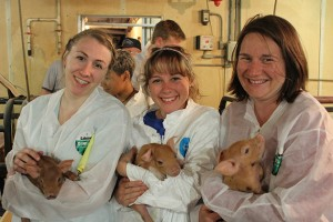 (L-R) Jennifer Kruzansky '14 (CAHNR), Molly Deegan '15 (CAHNR), and Ph.D. student Julie Campbell meeting some of the piglets at the Friest Farm in Radcliffe, Iowa.