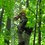 UConn Tree Program Cuts Chances of Power Outages