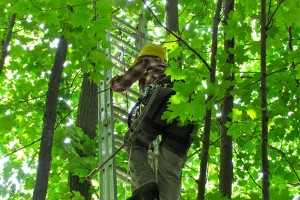 Amanda Bunce, a master's degree student in the Department of Natural Resources and the Environment, climbs a 30 foot ladder in order to affix a monitoring device to a red oak. (Sheila Foran/UConn Photo)