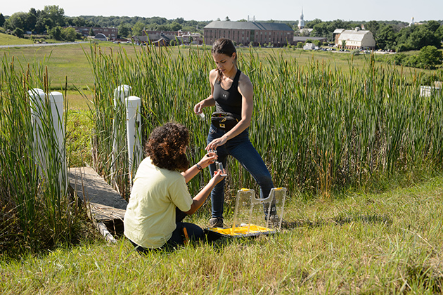 Eva Nelson '15 (CAHNR), left, and Emily McInerney '15 (CAHNR) take air samples from a wetland near the Kellogg Dairy Center. (Peter Morenus/UConn Photo)