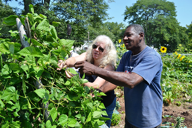 UConn Master Gardener Sarah Bailey offers guidance to local resident Robert Harris, as he harvests green beans from the Burgdorf Community Garden. (Chris DeFrancesco/UConn Health Photo)
