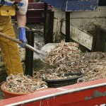 Fisheries Management Study Casts Aside Conventional Wisdom