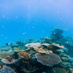 A healthy coral reef (Daniel H. Lin for UConn)