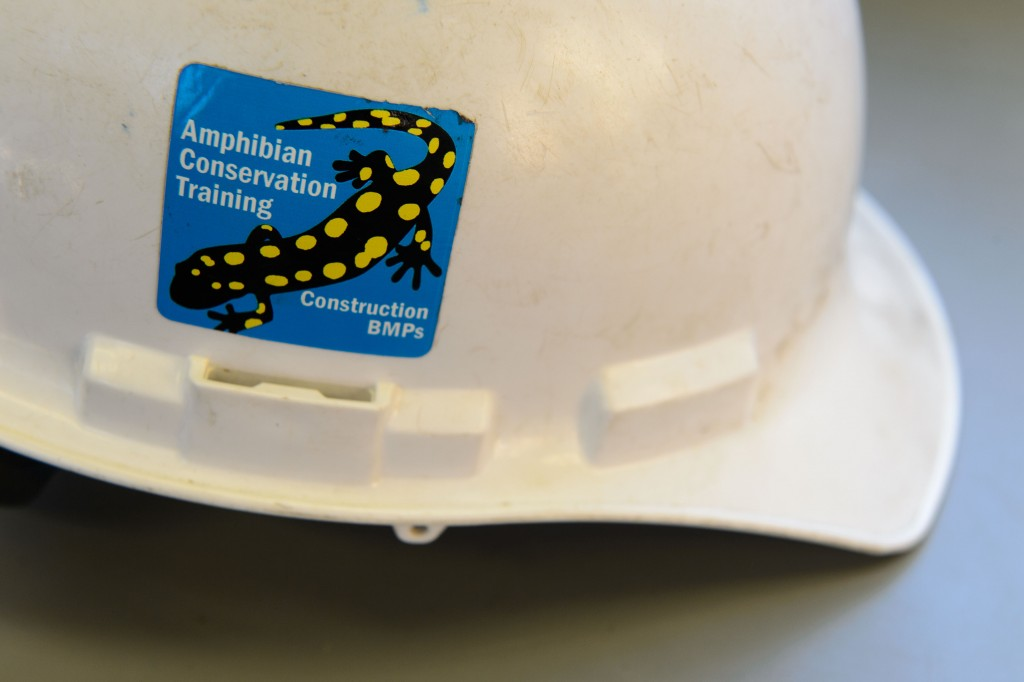 This sticker was given to construction workers on the Discovery Driveproject, following training to protect amphibians that live along the road. (Peter Morenus/UConn Photo)