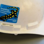 UConn Creates a Safe Path for Salamanders to Cross the Road