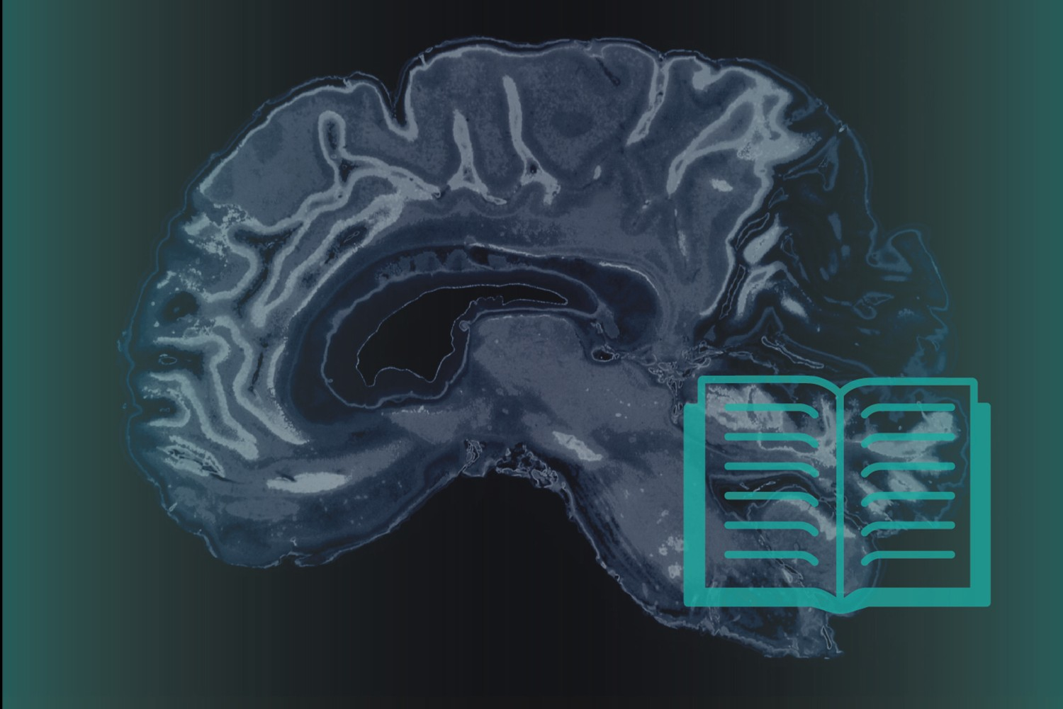 Graphic representing reading and the brain. (Christa Tubach/UConn Image)