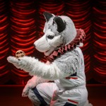 Jonathan the Husky poses wearing an Elizabethan collar on stage at the Harriet S. Jorgensen Theatre. (Peter Morenus/UConn Photo)