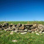 A stone wall near the peak of Horsebarn Hill on April 27, 2016. (Peter Morenus/UConn Photo)