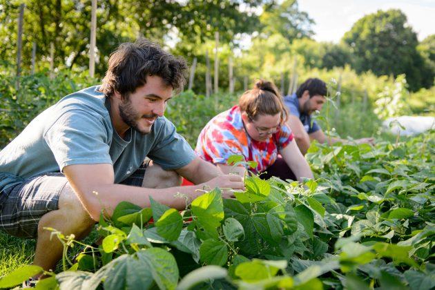 Sierra Club Ranks UConn a Green Campus Leader Again