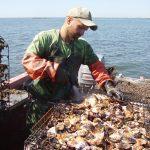 CT shellfish initiative. (Photo courtesy of Connecticut Sea Grant)