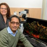Royce Mohan (seated) and Paola Bargagna-Mohan are part of a team of UConn researchers developing an imaging technique that will signal problems in blood vessels near the eye that could lead to vision loss. (Janine Gelineau/UConn Health Photo)