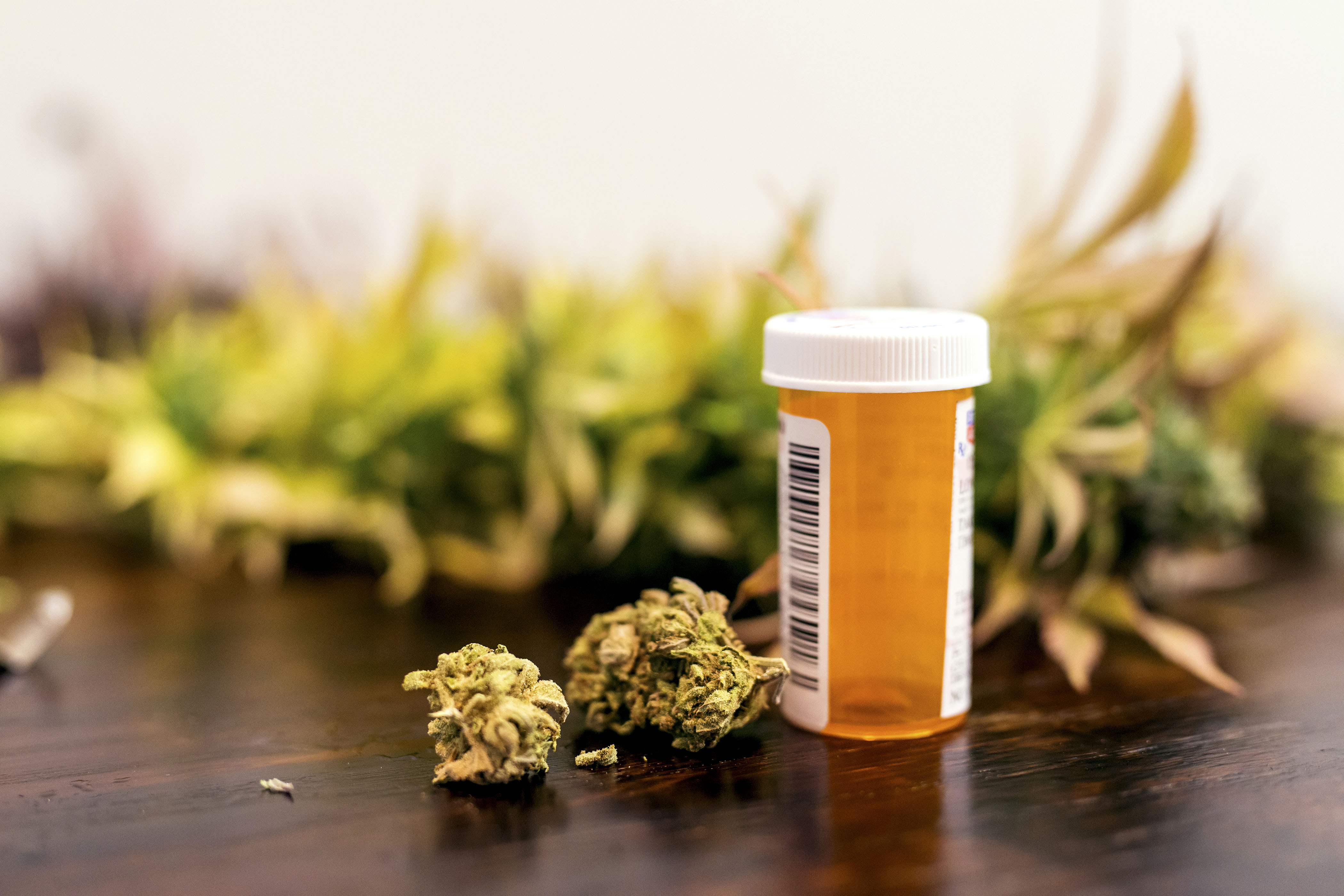 States That Legalize Medical Marijuana Also See Higher Birth