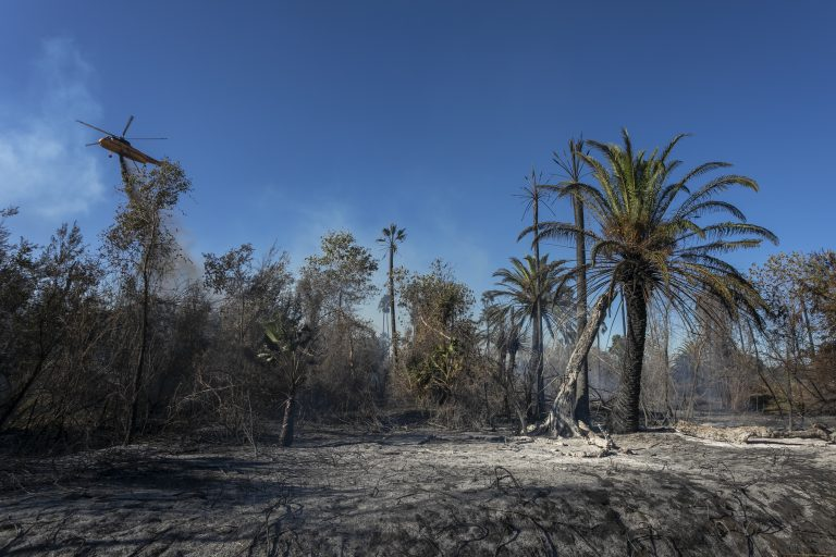 A forest in Claifornia charred by wildfire, the risk of which increases with climate change
