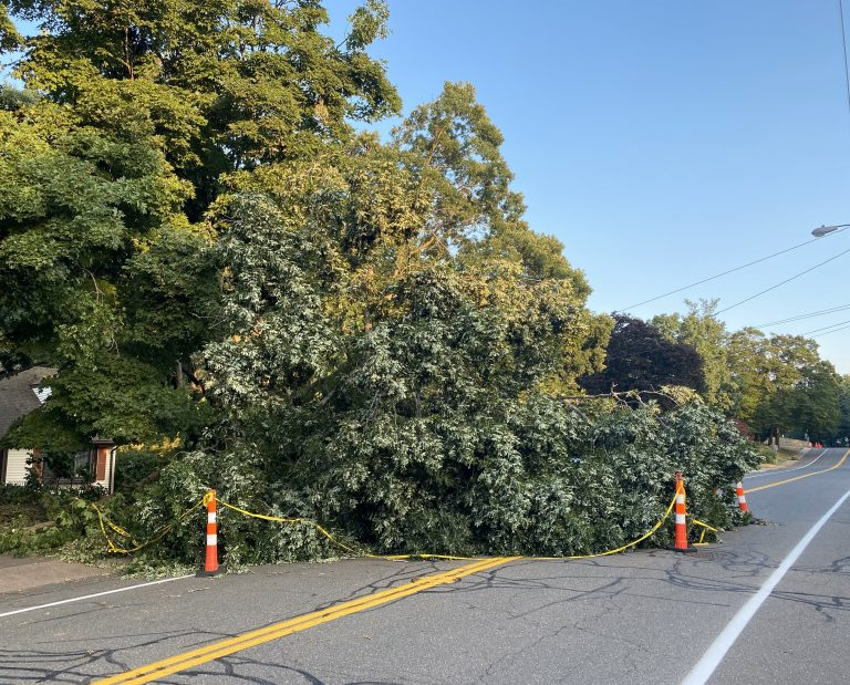 A large tree limb fallen in a residential street, flanked by orange traffic cones.