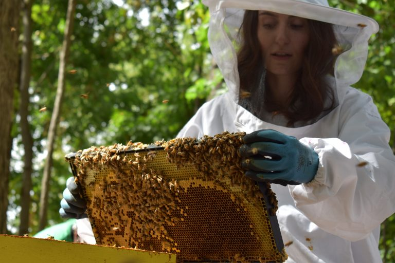UConn student Megan Chiovaro, in beekeeping gear, inspects a honeybee hive as part of her research.